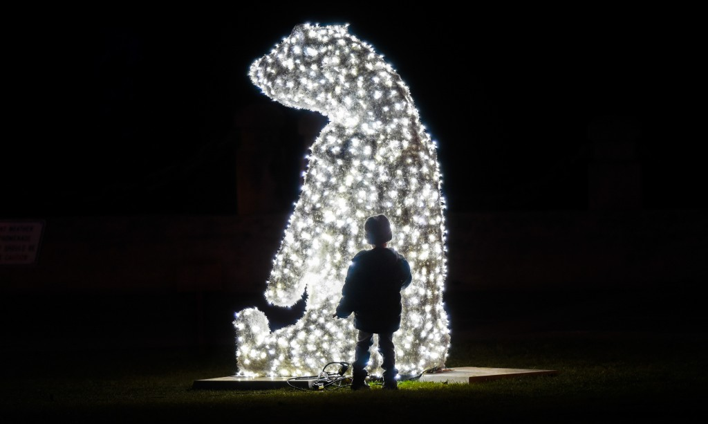 Dion Berisha, 4, of Burlington was fascinated by the twinkling polar bear at the Burlington Festival of Lights (Gary Yokoyama/ The Hamilton Spectator)